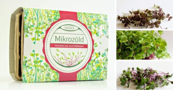 Mikrozöld ültetőcsomag – FŰSZERES MIX