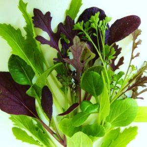 Fűszeres salátakeverék vetőmag
